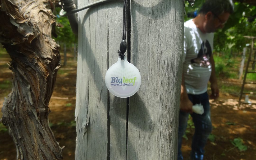 Bluleaf for IOF2020: first phase of trial on field