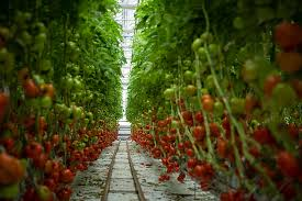 Agritech: the new face of Agri-food